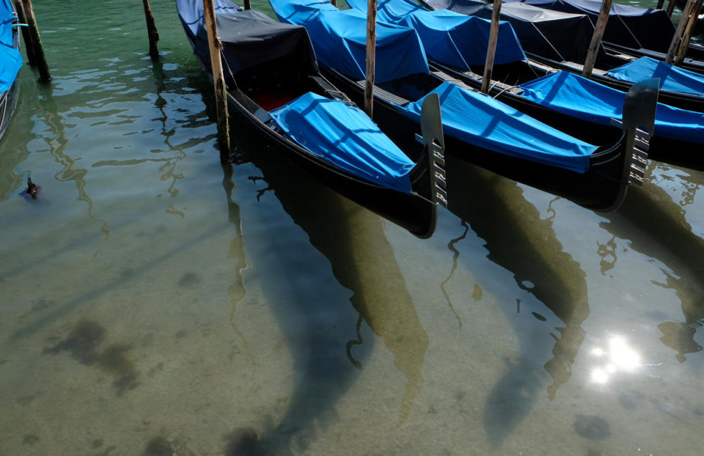 mespromenades-la-nature-grand-canal-venise-credits-@-the-guardian